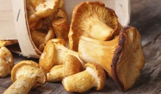 Wie Sie ganz einfach Pilze trocknen, einfrieren und einlegen