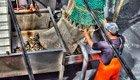 Fisch-Label garantieren nachhaltige Herkunft