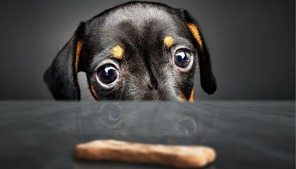 Hundeguetzli selber machen: Vier einfache Rezepte