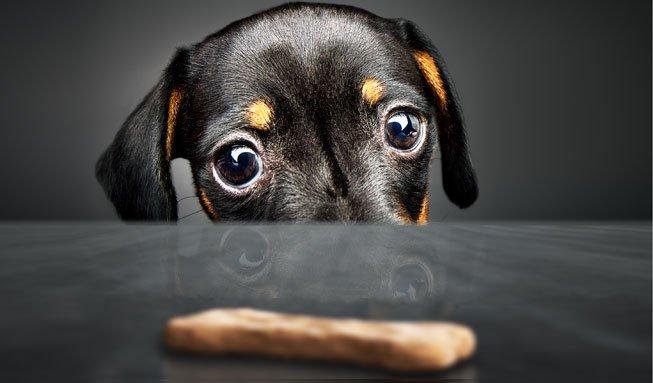 Tierisch gut: Vier Rezepte für gesunde Hundeguetzli