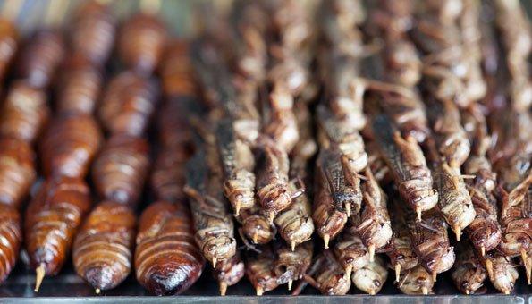 insekten essen werden wir bald alle heuschrecken und co essen. Black Bedroom Furniture Sets. Home Design Ideas