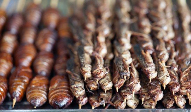 Insekten statt Rind und Schwein? So werden wir in Zukunft essen
