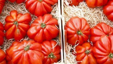 tomate berner rose saatgut