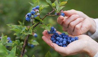 Für Jäger und Sammler: Welche Wildfrüchte Sie wofür nutzen können