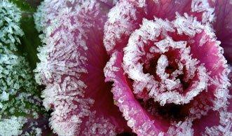 Wintergemüse: Kohl und Co. sind Fitmacher für kalte Tage