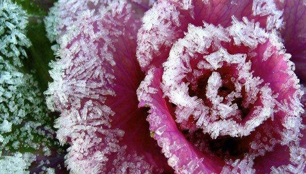 Wintergemüse: vitaminreiche und nachhaltige Lebensmittel im Winter