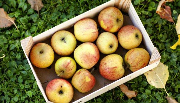 Alte Apfelsorten im Trend: Rezepte mit Boskop, Cox Orange & Co.