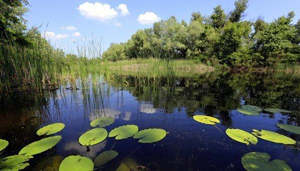 Naturweiher bieten viel Platz für die Fische.