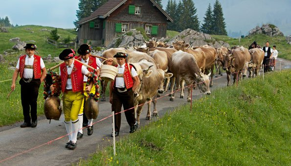 Alpabzug in der Schweiz: Hier erleben Sie die Tradition mit