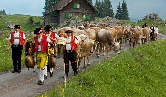 Alpabzug erleben: Wo Sie die Tradition besonders schön feiern