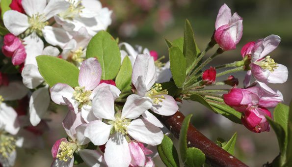 Bachblüten können den Körper natürlich heilen.