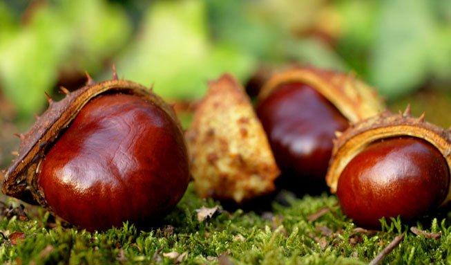 Basteln mit Naturmaterialien: Kastanien als schöne Herbstdeko