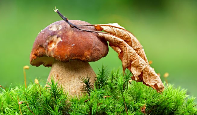 Auf in die Pilze! Tipps zum Sammeln und Bestimmen