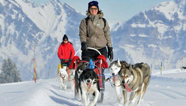 Schlittenhundfahrten in der Schweiz: Anbieter für Husky-Abenteuer