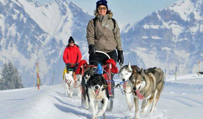 Mit Hundestärken durch die Natur: Husky-Abenteuer in der Schweiz