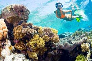 Das Great Barrier Reef gehört zu den beliebtesten Tauchgebieten.