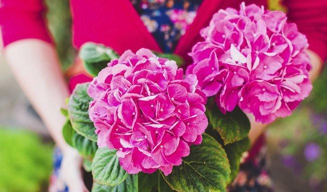 Mit diesen Balkonblumen können Sie die Artenvielfalt fördern