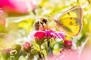 Mit diesen Balkonblumen förderst du die Artenvielfalt
