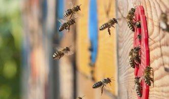 Mit dem «Flow Hive» ganz einfach selbst Bienen züchten?