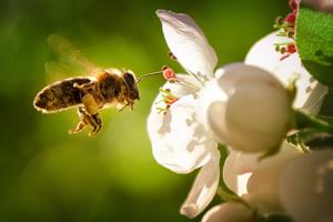 Clever einkaufen: So fördern Sie mit Ihrem Einkauf die Biodiversität