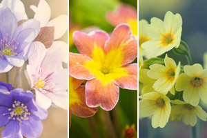 Die 12 schönsten Frühlingsblumen für Garten und Balkon