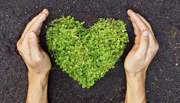 Der Stolz des Gärtners: Selbst angebautes Gemüse