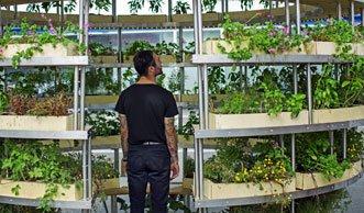 Urban Gardening auf kleinstem Raum: Der geniale Growroom