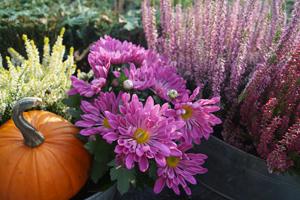 Die schönsten Herbstblumen für eine späte Blütenpracht