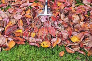 4 Tipps, wie Sie das Herbstlaub im Garten am besten nutzen