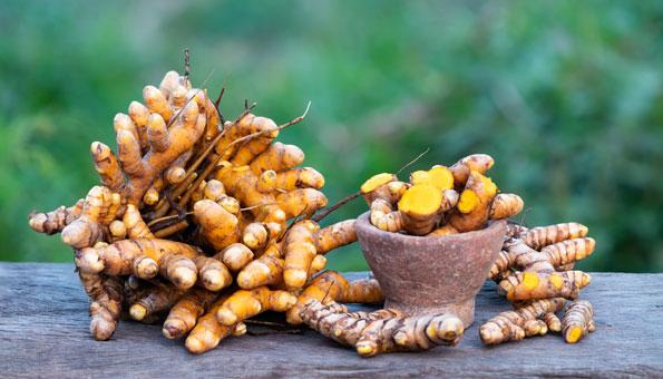 Kurkuma anpflanzen, statt weit gereiste Knollen kaufen