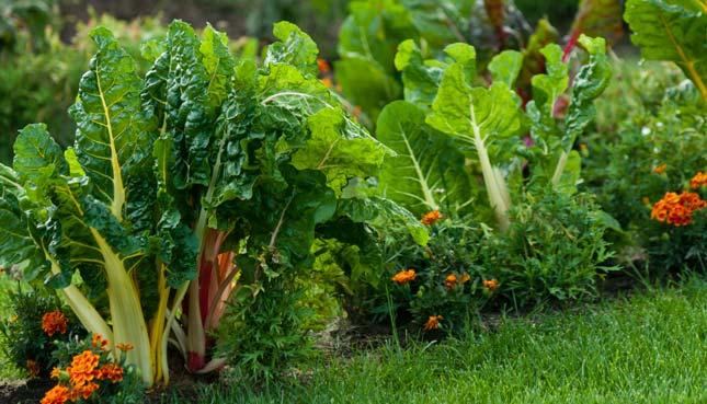 So beschert dir Mischkultur eine reiche Ernte im Beet