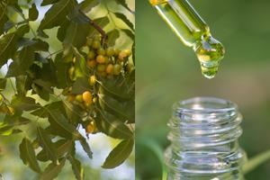 Neemöl richtig verwenden und was beim Kauf zu beachten ist