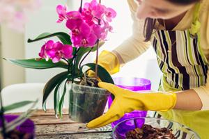 Warum du gerade jetzt deine Orchideen umtopfen solltest