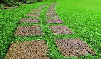 Für sattes Grün: Wann und wie Sie am besten Rasen säen