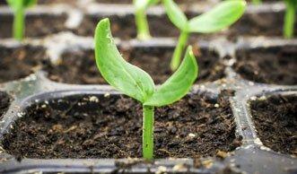 Tomate & Co: Setzlinge ziehen ist günstig und bringt frühe Ernte