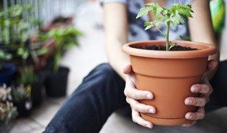 Diese Gemüse können Sie auch auf dem Balkon anbauen