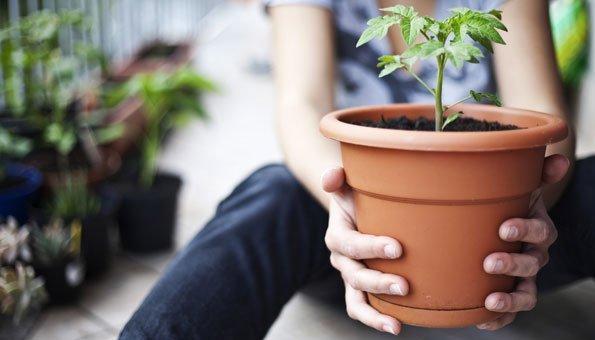 Gemüse für Balkon: Welche Pflanzen Sie wie anbauen können