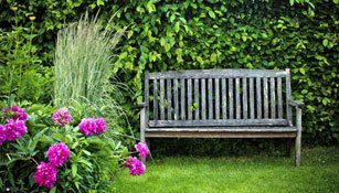 Hecken und Sträucher im Garten
