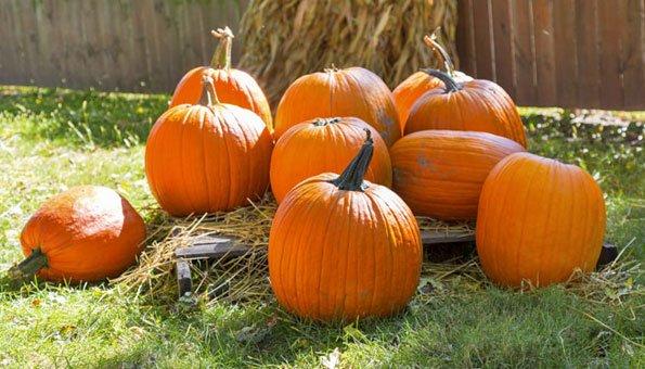 ihr garten im oktober – es gibt dort noch viel zu tun! - 2014-12, Gartengerate ideen