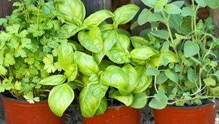 Pflanzen im Kübel