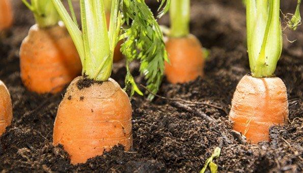 gemüse im garten – rüben pflanzen, pflegen und ernten - 2015-03-17, Gartengerate ideen