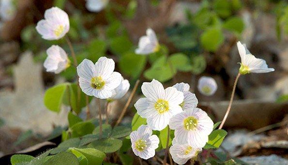Schattenpflanzen was w chst auch bei wenig sonne oder - Schattenpflanzen garten ...