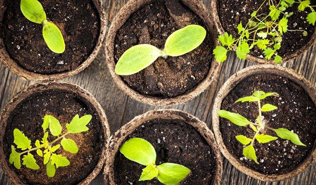 Der Indoor-Garten: Wie die Fensterbank zum Minigarten wird