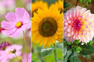 Die 12 schönsten Sommerblumen für Garten und Balkon