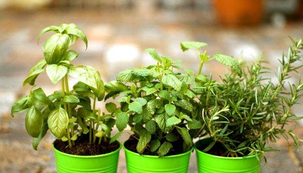 Frisches Gemüse vom Balkon