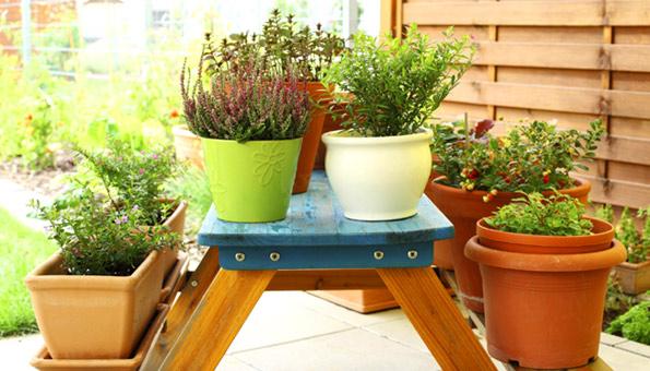 kr uter im topf tipps f r das pflanzen und pflegen. Black Bedroom Furniture Sets. Home Design Ideas