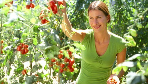 tomaten im garten pflanzen die neueste innovation der. Black Bedroom Furniture Sets. Home Design Ideas