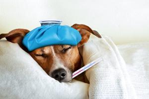 Grippeimpfung trotz Corona: So sinnvoll ist sie jetzt