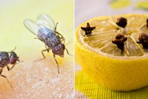 Mit diesen einfachen Hausmitteln werden Sie Fruchtfliegen los