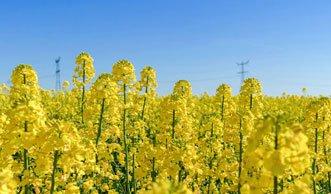 Nicht jedes Bio-Benzin ist umweltfreundlich